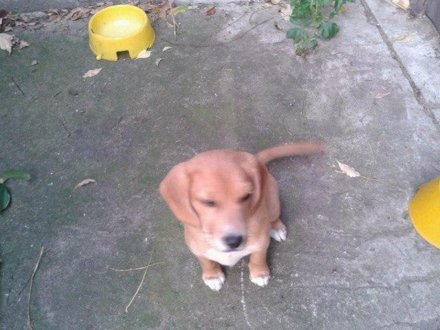 W dniu 26 grudnia zaginął pies z ulicy Kochanowskiego. Mieszaniec barwy jasno brązowej, wyglądem…