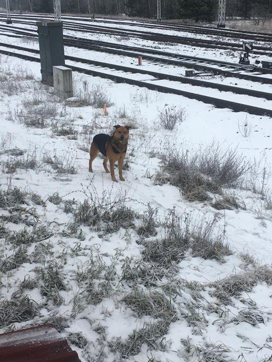 Edit: pies szczęśliwie wrócił ze swoim Panem do domu ️ Pies błąka się przy…