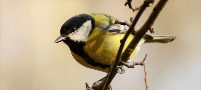 Zapraszamy do zapoznania się z ulotką informacyjną poświęconą prawidłowemu dokarmianiu ptaków żyjących w naszym…