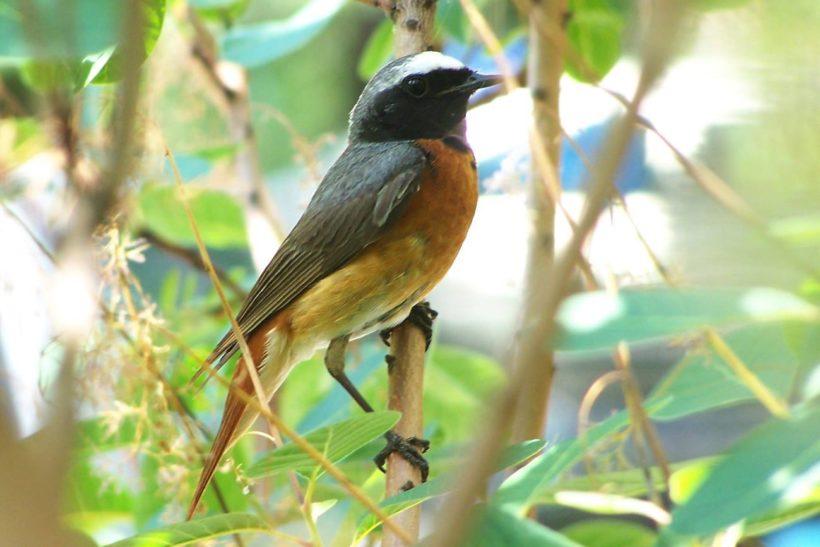 Zapraszamy wszystkich miłośników przyrody w dniu 7 października (niedziela) na wycieczkę ornitologiczną w ramach…