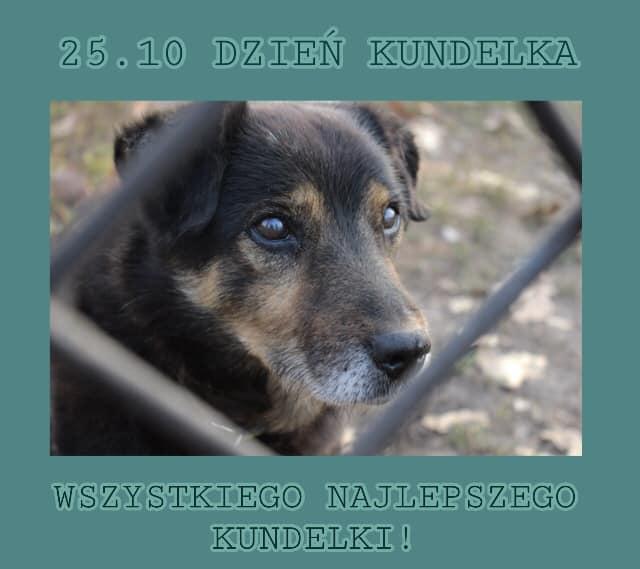 25 października obchodzimy Dzień Kundelka Pamiętajmy szczególnie o tych psiakach, które nie mają kochających…