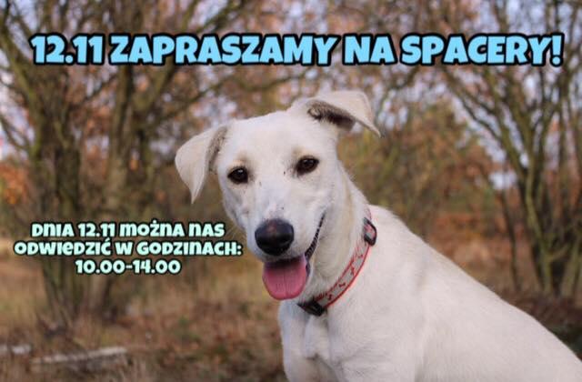 Schronisko dla bezdomnych zwierząt w Puławach zaprasza dzisiaj na spacery z psiakami. My również…