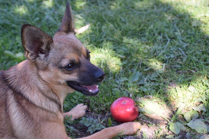 Wiedzieliście, że dziś obchodzimy Dzień Psa? My uwielbiamy nasze psiaki i chętnie obejrzymy zdjęcia…