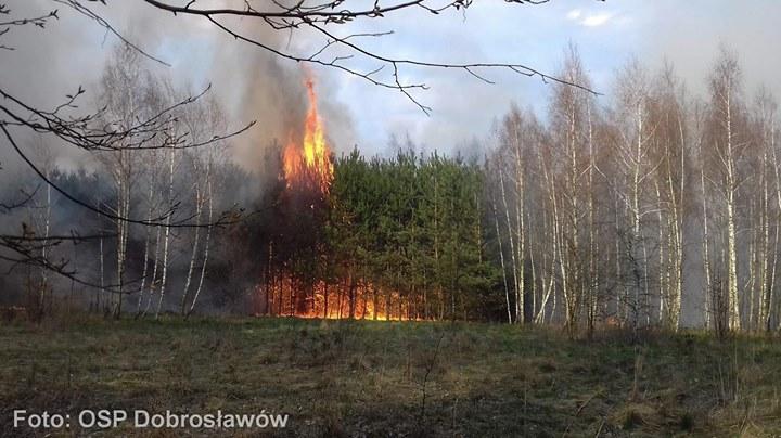 KRONIKA STRAŻACKA 1. Pożar suchej trawy i wierzby w Janowcu. Na miejscu OSP Janowiec.…