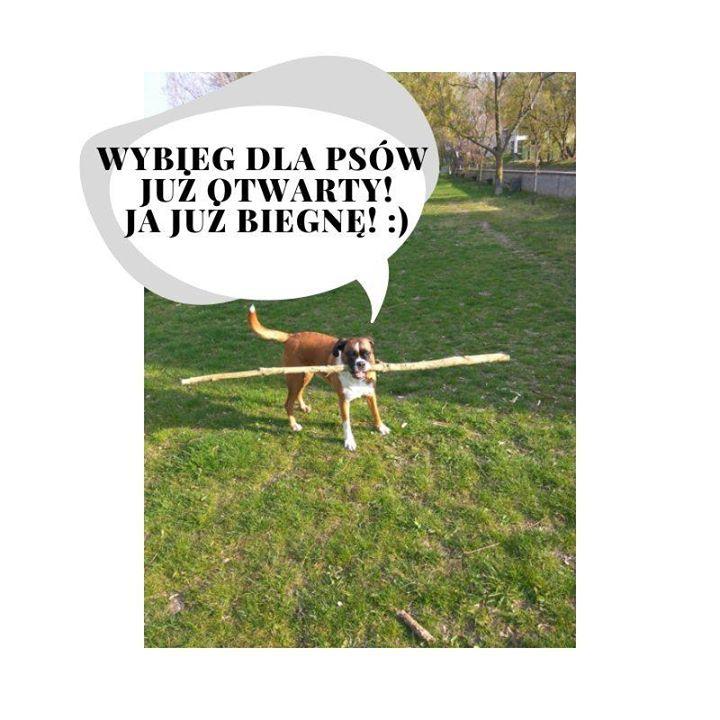 ️⬅️ Dziś mamy wesołą informację dla Waszych psiaków! Wybieg dla psów na błoniach jest…