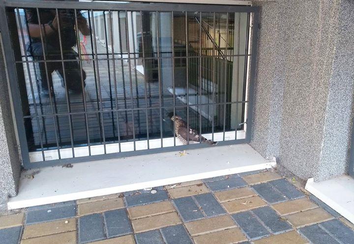 Puławska Straż Miejska kolejny już raz niesie pomoc zwierzętom. Tym razem potrzebował jej młody…